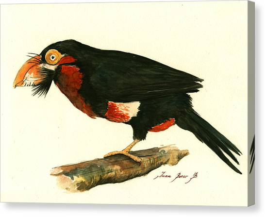 Toucans Canvas Print - Bearded Barbet by Juan Bosco