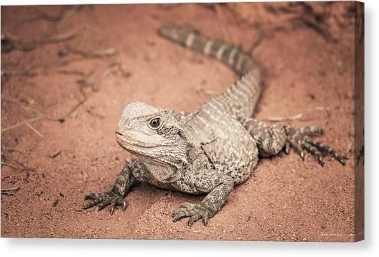 Lizards Canvas Print - Bearded Dragon Lizard by Wim Lanclus