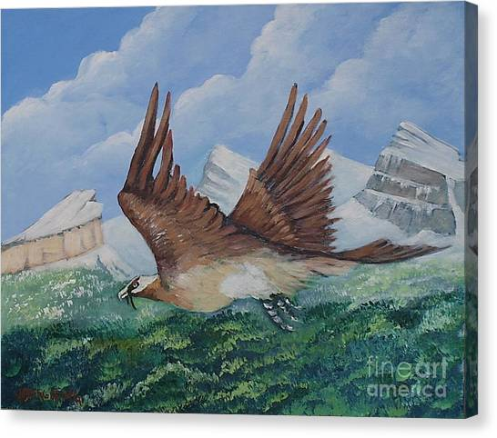 Beared Gypaete Canvas Print