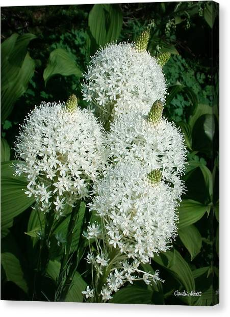 Canvas Print featuring the photograph Beargrass  by Claudia Abbott