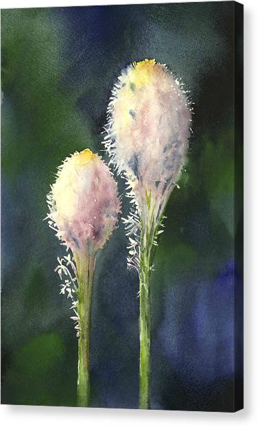 Beargrass Canvas Print
