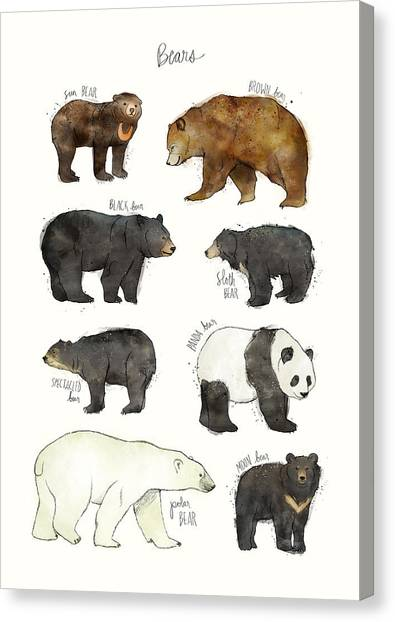 Panda Canvas Print - Bears by Amy Hamilton
