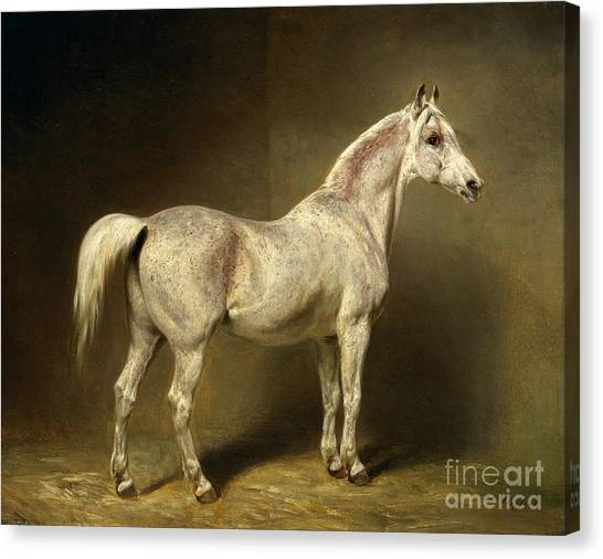 Horses Canvas Print - Beatrice by Carl Constantin Steffeck
