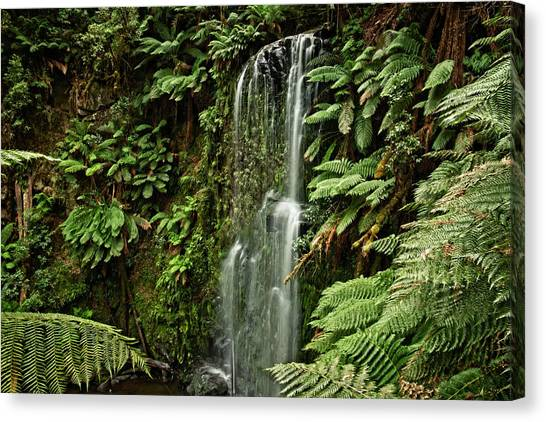 Great Otway National Park Canvas Print - Beauchamp Waterfall by Catherine Reading