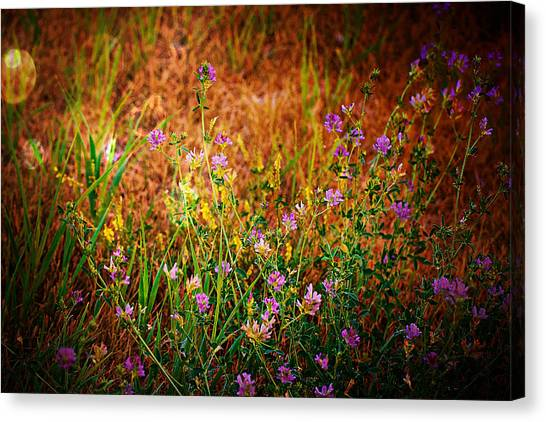Beautiful And Wild Flowers Canvas Print