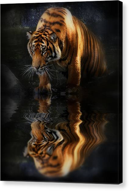 Beautiful Animal Canvas Print