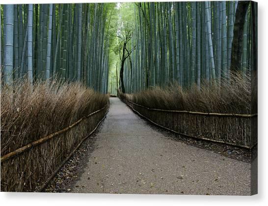 Sagano Bamboo Forest Canvas Print - Beautiful Arashiyama Bamboo Grove by Brian Kamprath