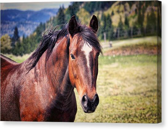 Beautiful Bay Horse In Pasture Canvas Print