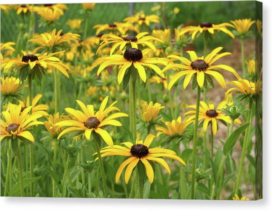Beautiful Black Eyes Canvas Print
