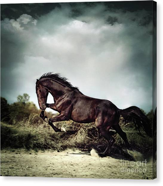 Beautiful Black Stallion Horse Running On The Stormy Sky Canvas Print