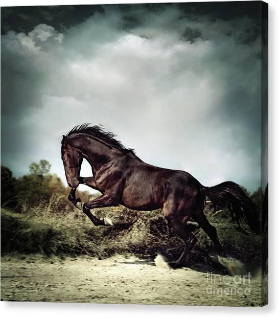 Beautiful Black Stallion Horse Running On The Stormy Sky Canvas Print