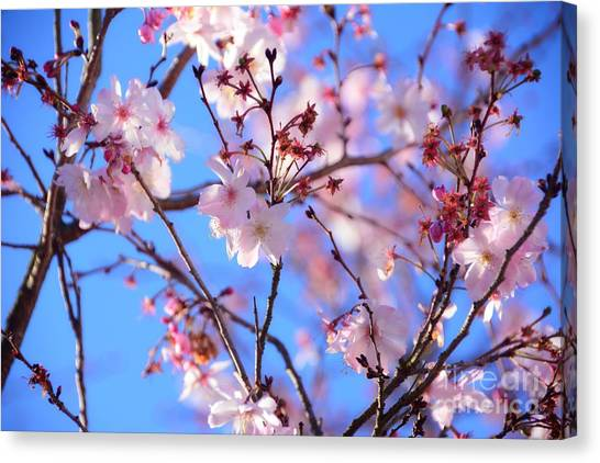 Beautiful Blossoms Blooming  For Spring In Georgia Canvas Print