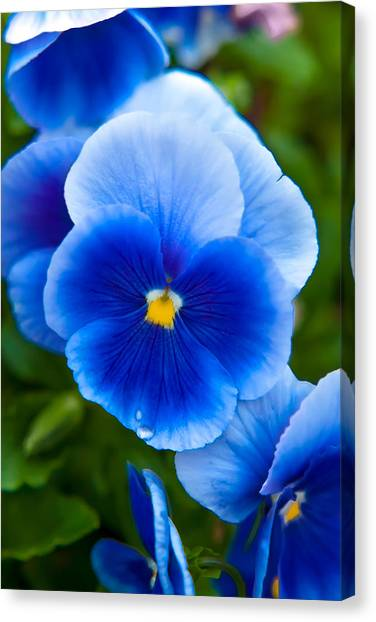 Romantic Flower Canvas Print - Beautiful Blues by Az Jackson