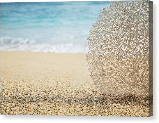 Beautiful Coral Element 1 Canvas Print