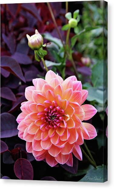 Beautiful Dahlia Canvas Print