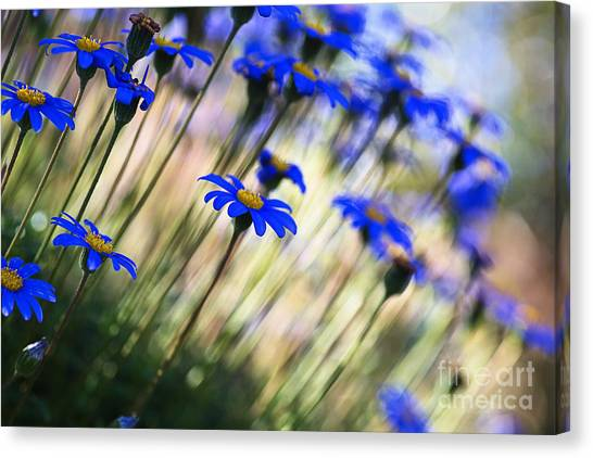 Beautiful Dancing Blue Flowers Romance Canvas Print