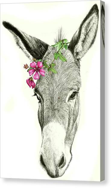 Beautiful Donkey Canvas Print