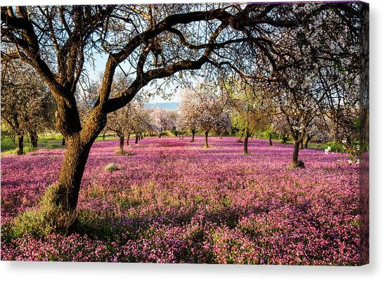Beautiful Field With Purple Veil Of Flowers In The Ground. Canvas Print
