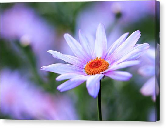 Beautiful Flower Canvas Print