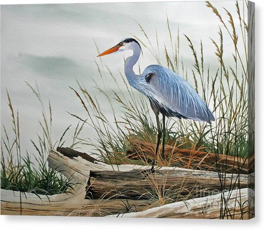 Beautiful Heron Shore Canvas Print