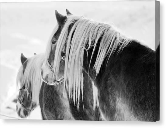 Beautiful Horse Canvas Print by Martin Rochefort