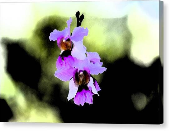 Beautiful Orchid Canvas Print by Nanette Hert