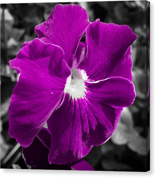 Beautiful Purple Canvas Print
