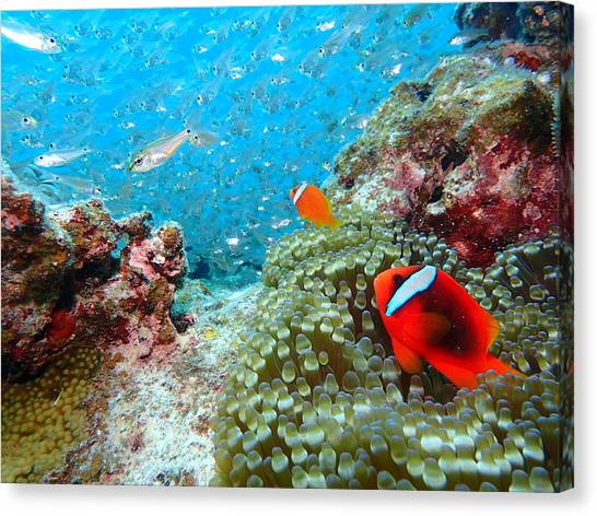 Scuba Diving Canvas Print - Beautiful Sea by Tetsuya Akiyama