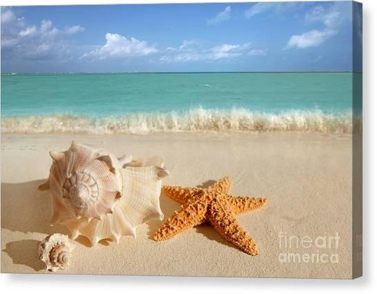 Beautiful Shell On Sand Canvas Print