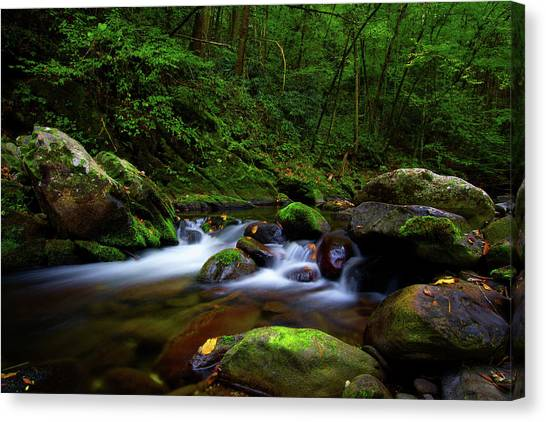 Beautiful Stream In Tremont Smoky Mountains Tennessee Canvas Print
