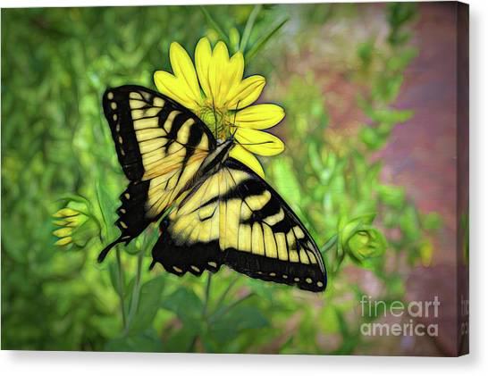 Beautiful Swallowtail Butterfly Canvas Print