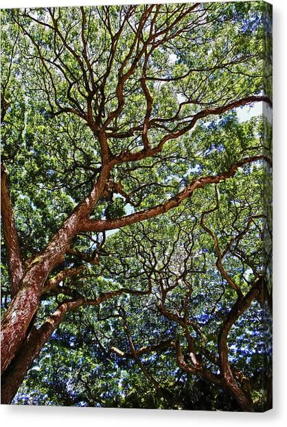 Beautiful Waimea Trees Canvas Print