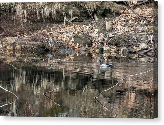 Canvas Print featuring the photograph Beautiful Wood Ducks  by Betty Pauwels