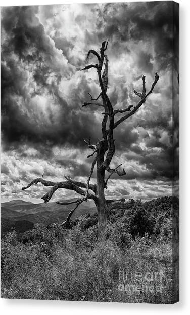 Beautifully Dead In Black And White Canvas Print