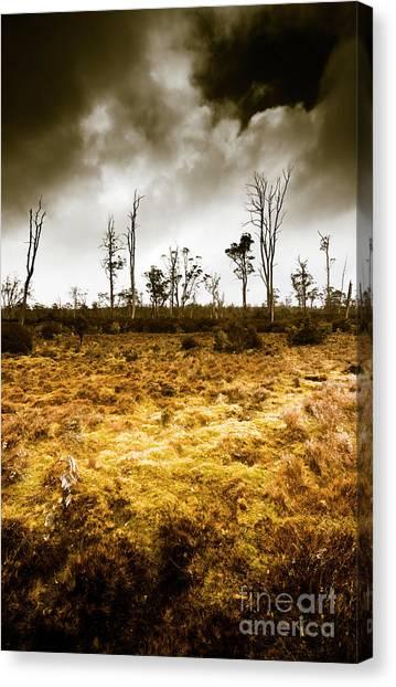Arid Canvas Print - Beauty And Barren Bushland by Jorgo Photography - Wall Art Gallery