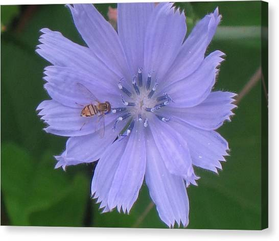 Beauty And The Bee Canvas Print by Marjorie Tietjen