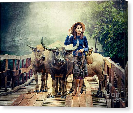 Beauty And The Water Buffalo Canvas Print