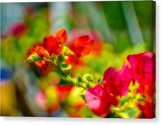 Beauty In A Blur Canvas Print