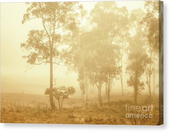 Foggy Forests Canvas Print - Beauty In A Forest Fog by Jorgo Photography - Wall Art Gallery