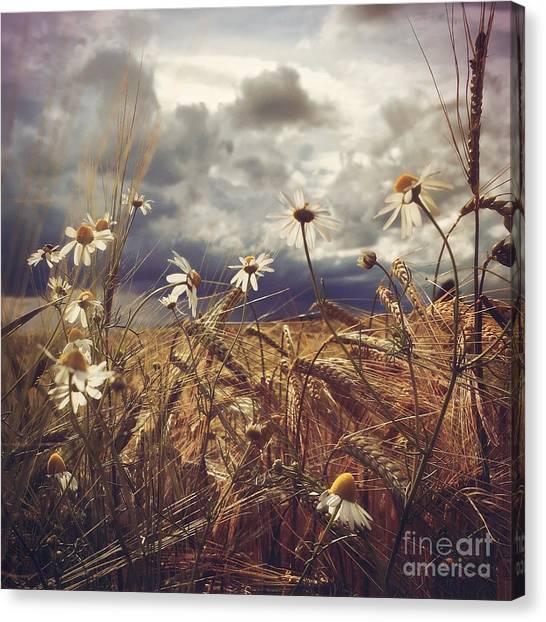 Beauty In Chaos Canvas Print by Mariko Klug