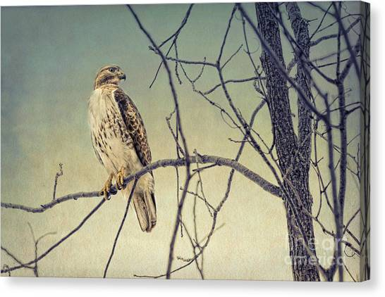 Red-tailed Hawk On Watch Canvas Print