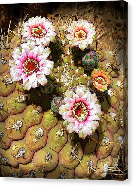 Beauty In The Desert Canvas Print