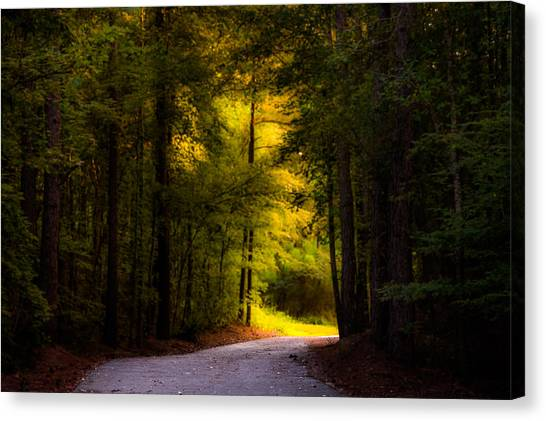 Beauty In The Forest Canvas Print