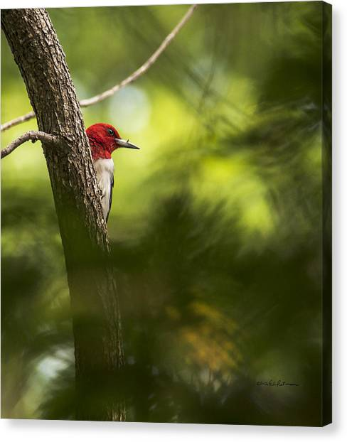Canvas Print featuring the photograph Beauty In The Woods by Edward Peterson
