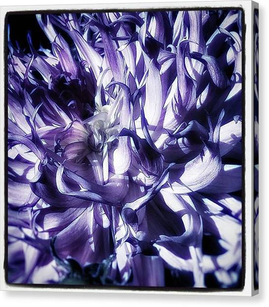 Canvas Print featuring the photograph Beauty Out Of Chaos. No Wonder Dahlias by Mr Photojimsf