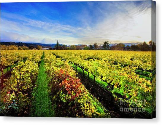 Sonoma Valley Canvas Print - Beauty Over The Vineyard by Jon Neidert