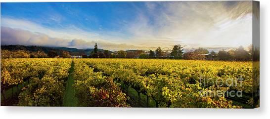 Sonoma Valley Canvas Print - Beauty Over The Vineyard Panoramic by Jon Neidert