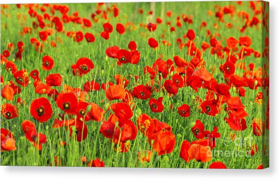 Beauty Red Poppies Canvas Print