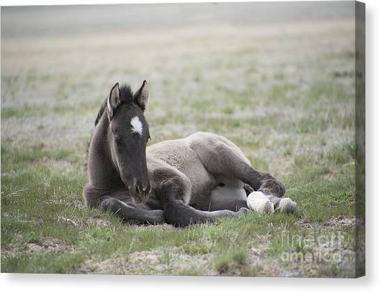 Beauty Rest Canvas Print by Nicole Markmann Nelson