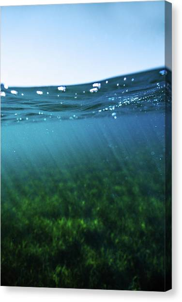 Beauty Under The Water Canvas Print